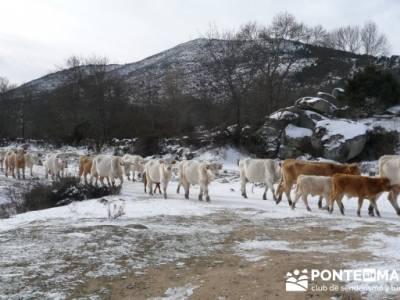 Valdemanco _ Buitrago del Lozoya - senderismo joven madrid; senderismo y montaña